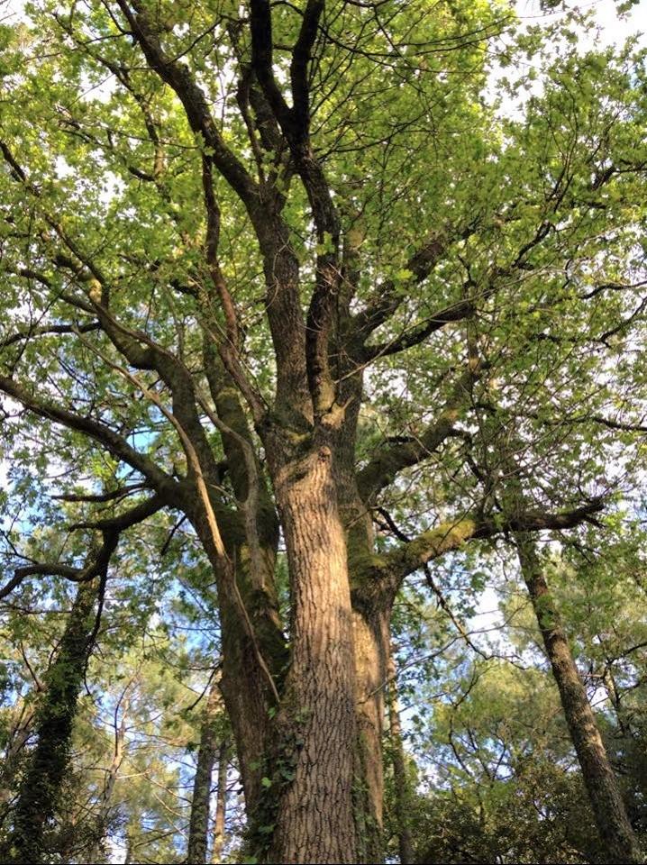 bienfaits arbres