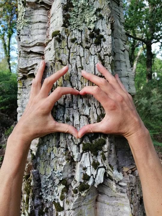 sport santé bien-être nature bienfaits arbres